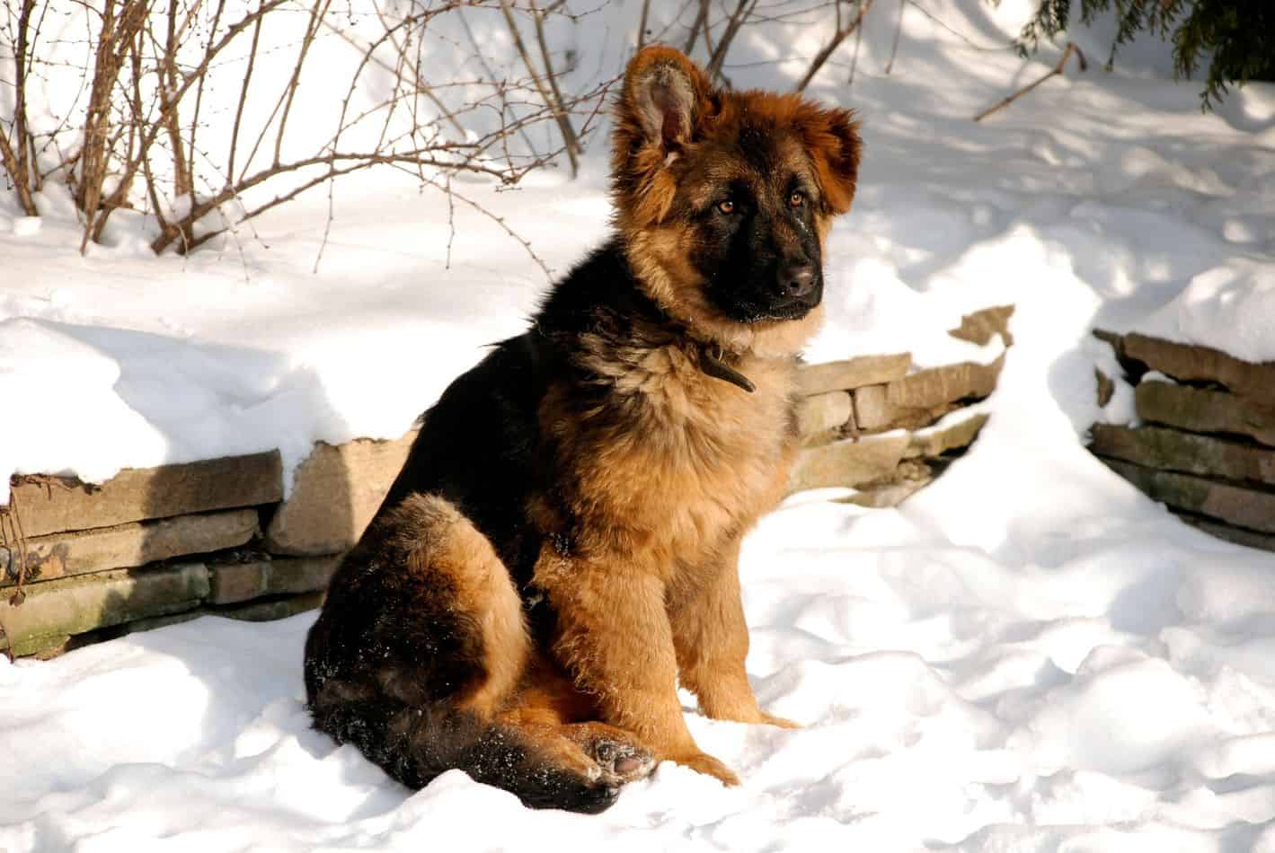 They are an all-weather dog breed