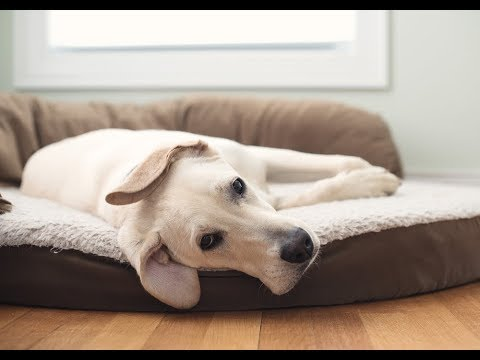 How To Wash A Dog Bed: A Guide